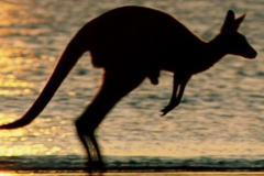 cropped-wallpaper_australie_animaatjes-20